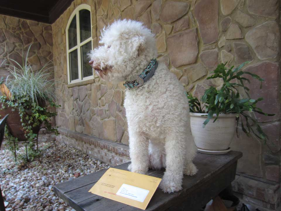 Tippy the Dog with a Mail